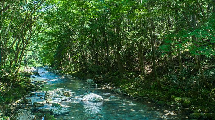 水循環を知り地下水管理を考える-岐阜県を事例に-