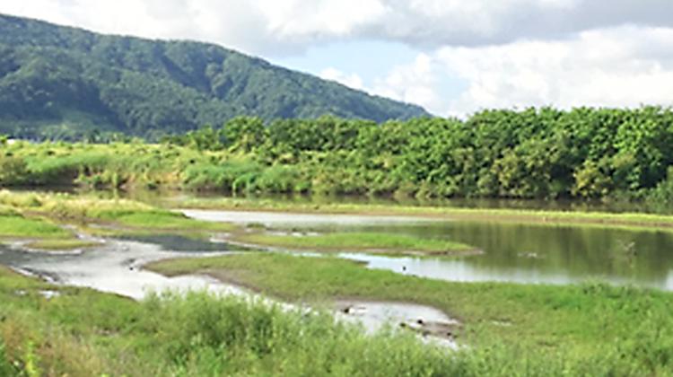 治水対策と湿地環境の創出を両立~コウノトリ等の多様な生物が暮らせる湿地を目指して~